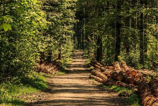 Четверть сертифицированных лесов планеты приходится на Россию